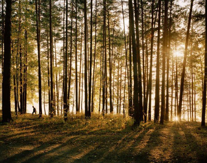 Woodland, Zheleznogorsk, Eastern Siberia, May 2005