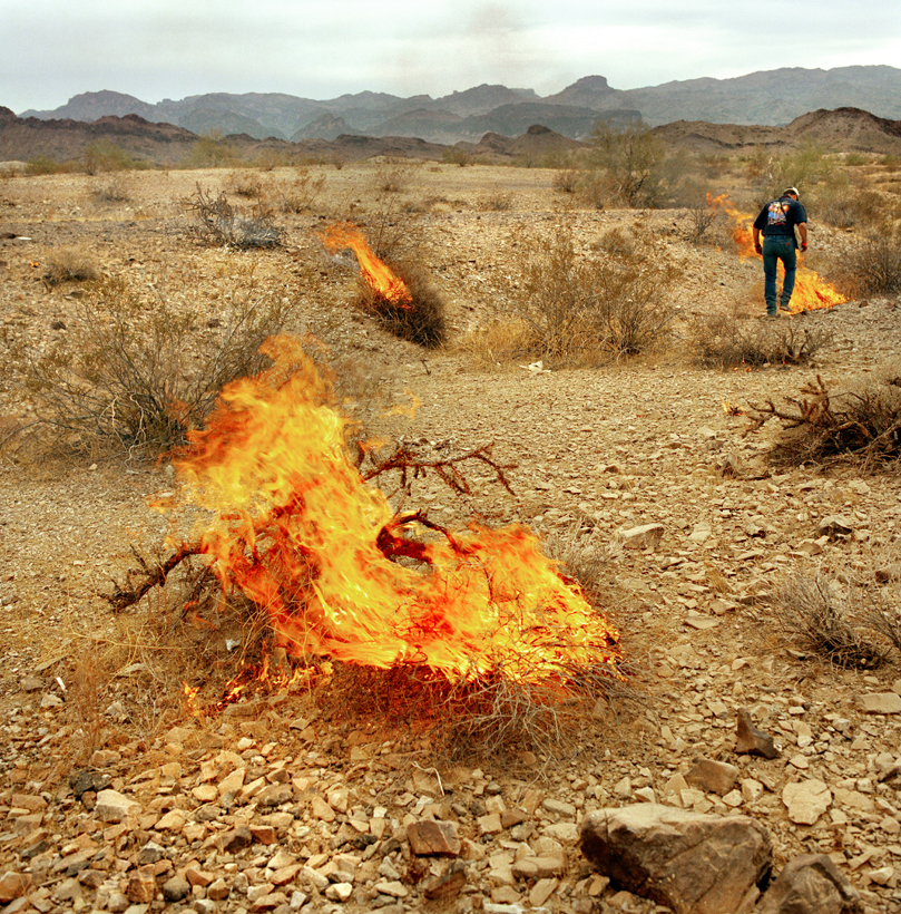 Burning Bushes, Winter Blast, Arizona, 2002